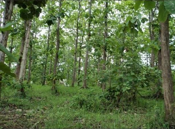 Hutan Blora